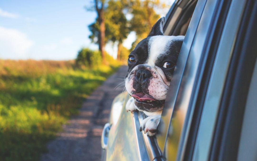 Pies w podróży